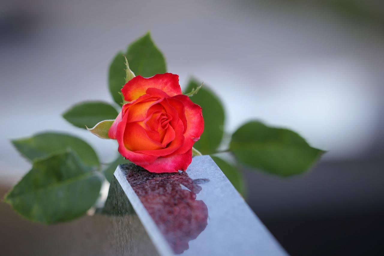 rosas lapida