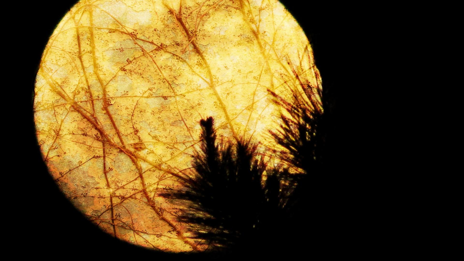 """""""O Samhain"""" una tradición pagana arraigada en la cultura gallega."""